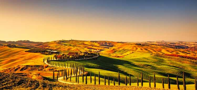 Cypress trees along path in Tuscan hills