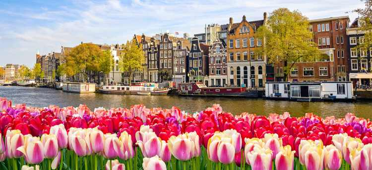 Tulips in Amsterdam | River Cruises in Spring