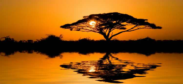 African Savannah Tree at Sunset | Holidays to Botswana