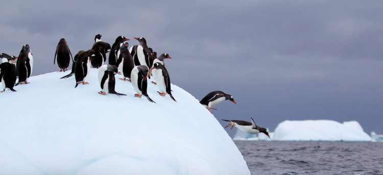 Penguins in the snow | Antarctica | Holidays to Antarctica