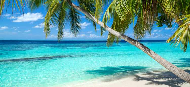 Palm Trees | clear sea | beach | Maldives | Holidays to the Maldives