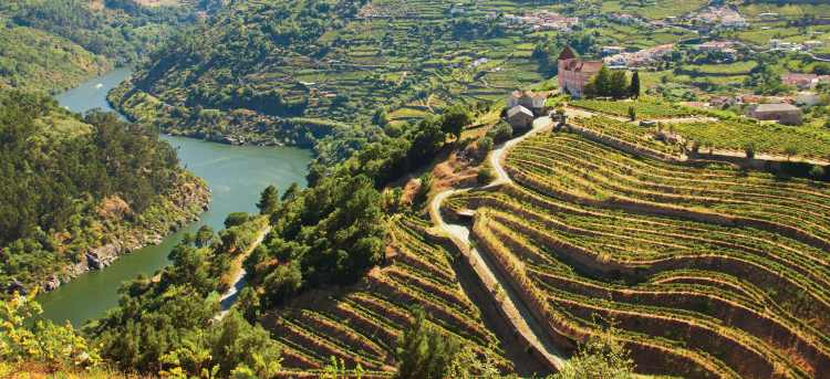 Vineyards line the banks of the Douro river valley | Holidays to Portugal