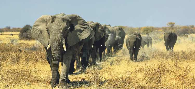elephants | africa | Wildlife and Safari Tours