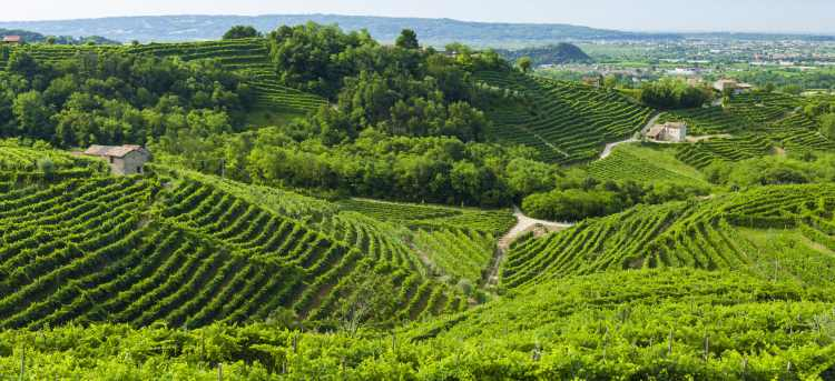 Prosecco vineyards | Valdobbiadene | Italy | Riviera Travel | escorted tour