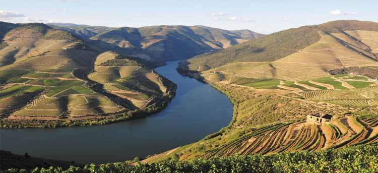Douro Valley | vineyards | green hills | Douro river | Portugal | Riviera Travel | river cruise