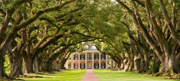 Oak Alley Plantation | tunnel of trees | Louisiana | USA | America | Riviera Travel | escorted tour