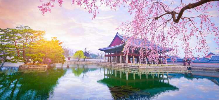 Gyeongbokgung Palace with cherry blossom | South Korea