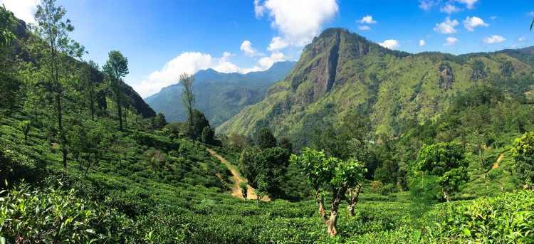 tea plantations | sri lanka | escorted tour | Riviera Travel | solo traveller