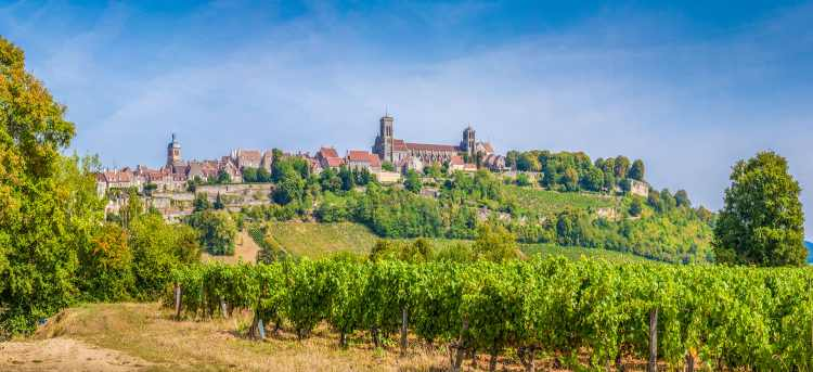 Burgundy | vineyard | France | Riviera Travel | River Cruises