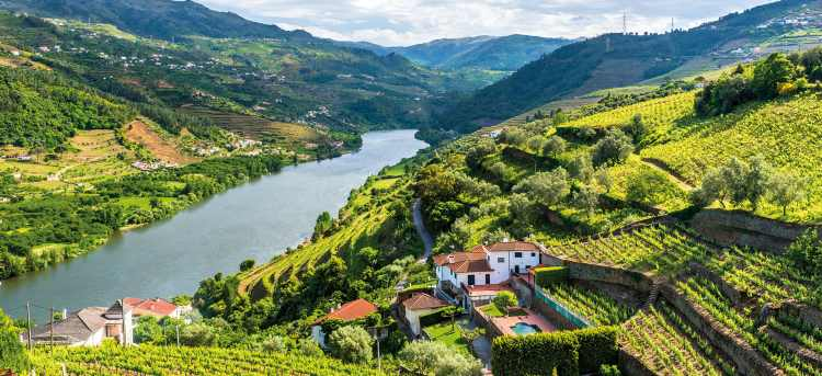 Douro Valley | Portugal | hillside vineyard | Riviera Travel