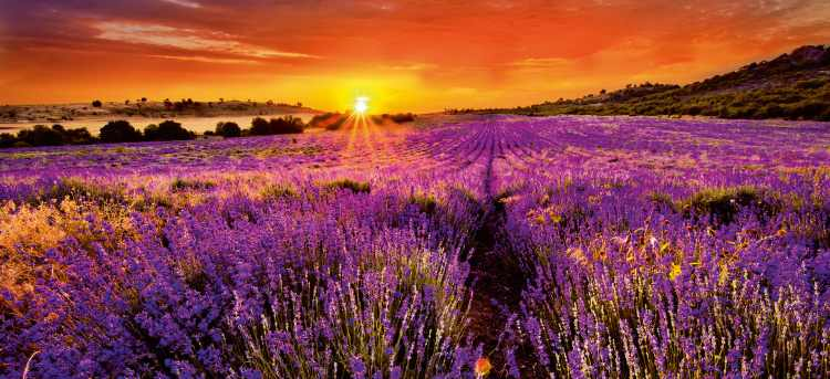 Sunset Countryside View of Provence | Riviera Travel | River Cruises