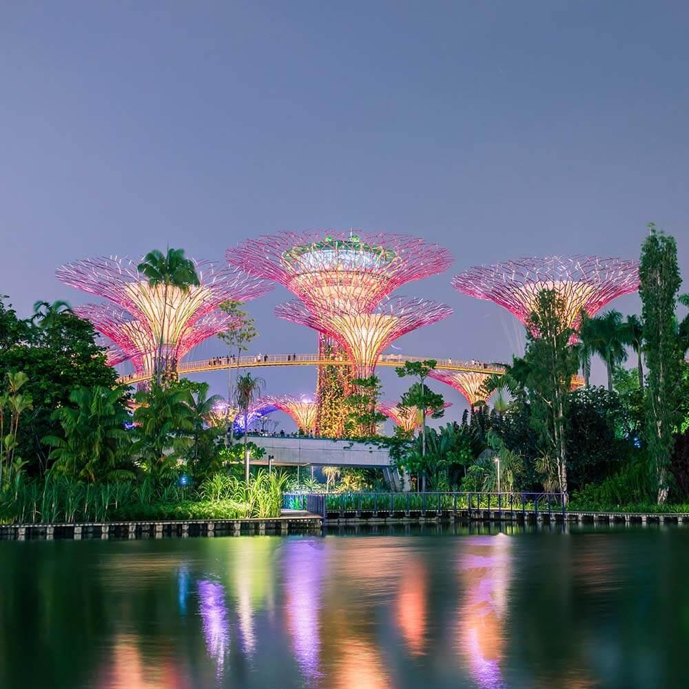 Singapore's Supertree Grove