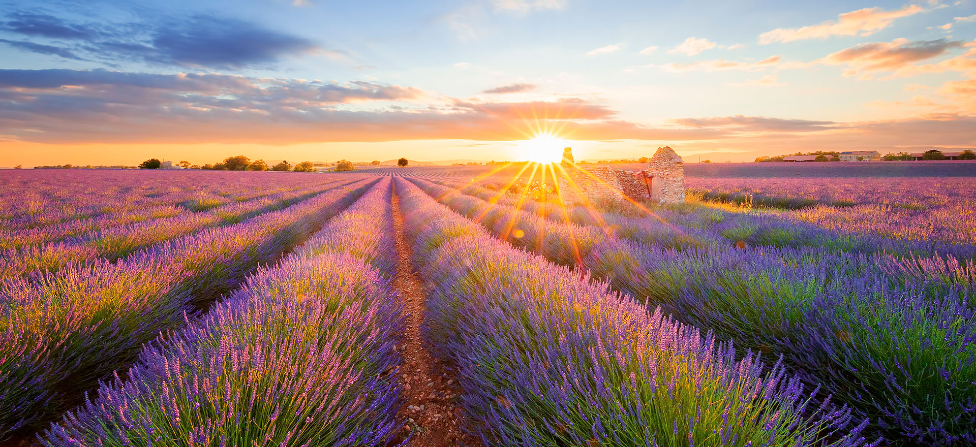 Sunset over the Lavender fields in Provence