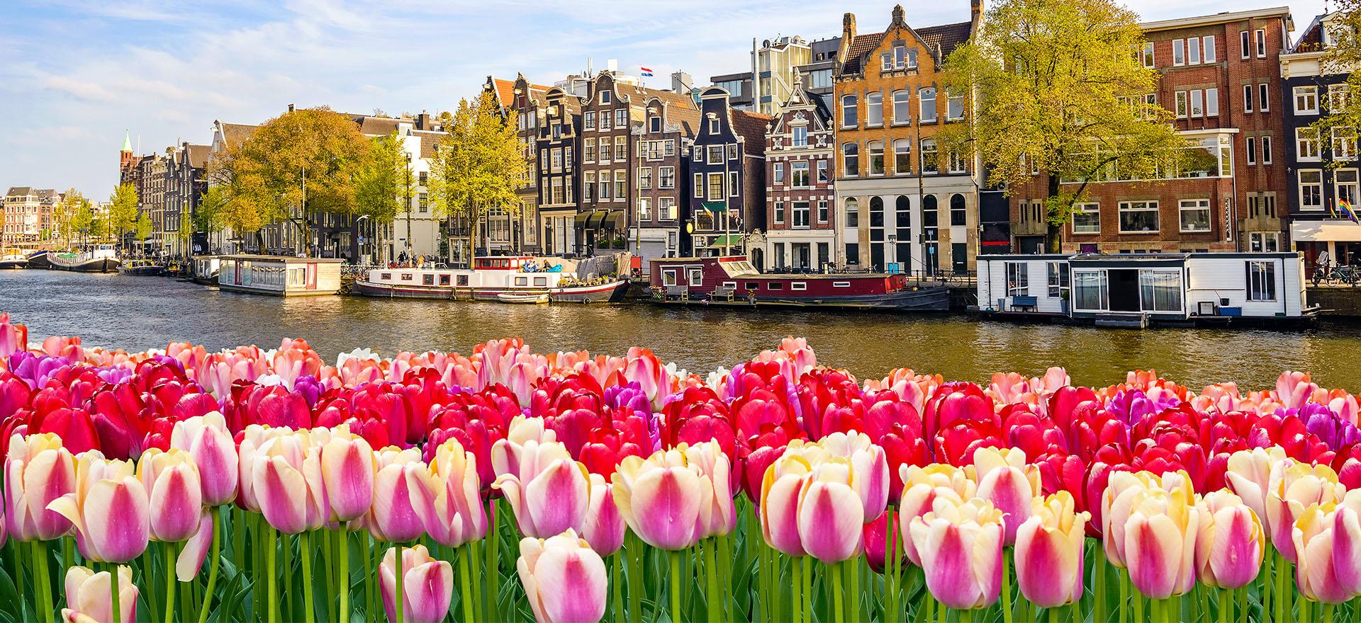 Dutch Waterways with Tulips