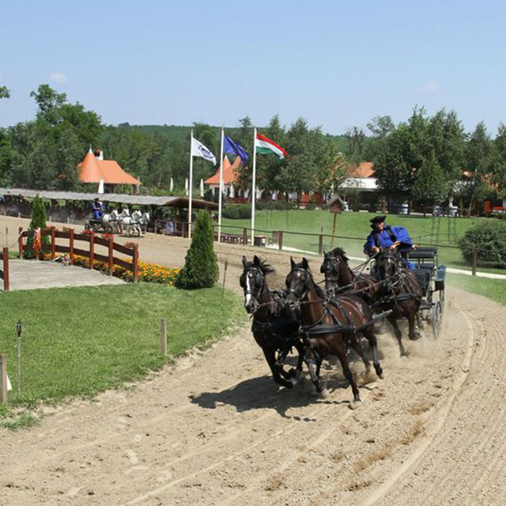 Carriage racing at Lazar Equestrian Park