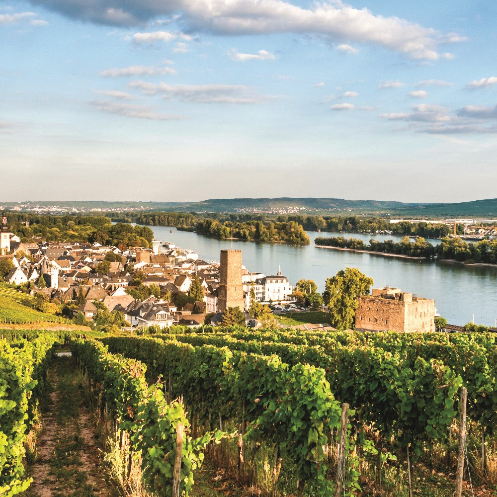 Vineyards and houses in Rüdesheim