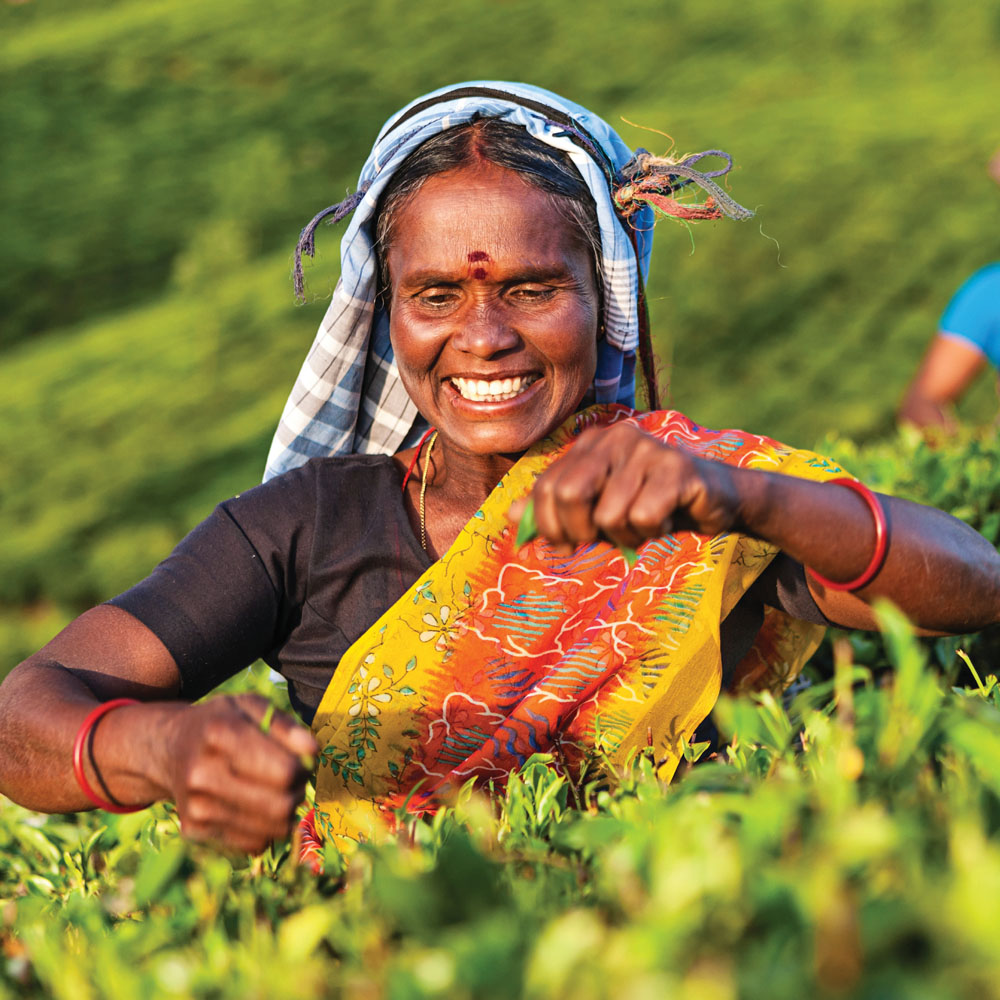 Local woman working in the tea fields