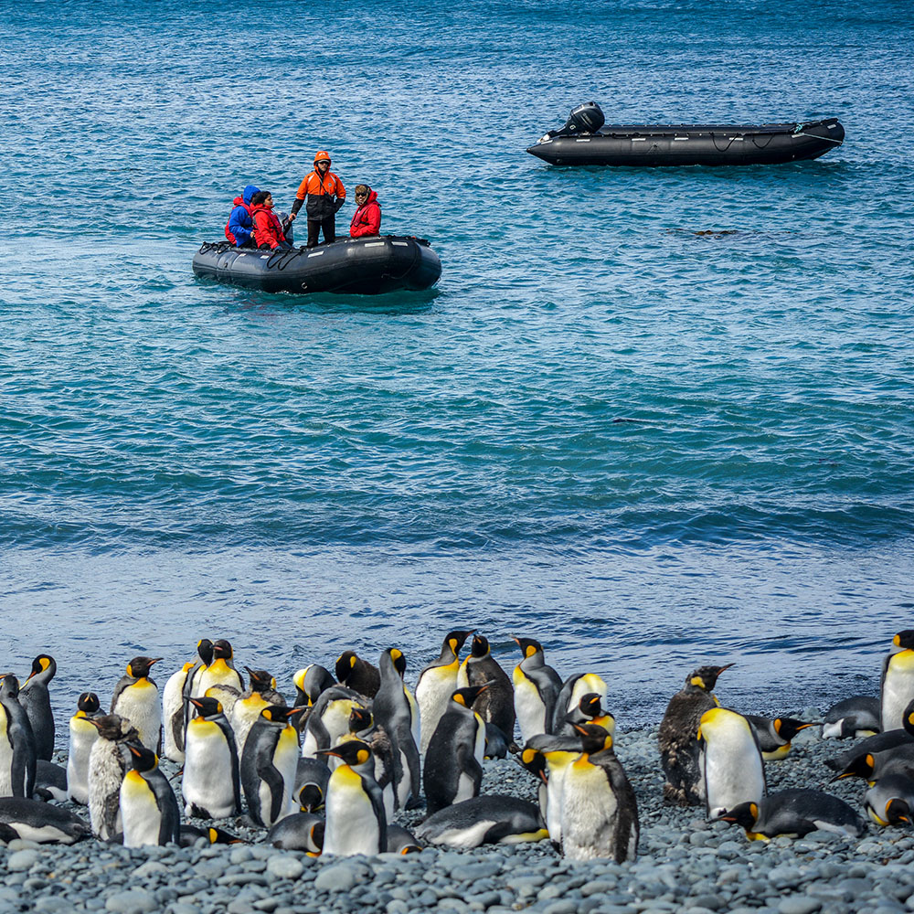 Penguin colony on the beach & Zodiac dinghies