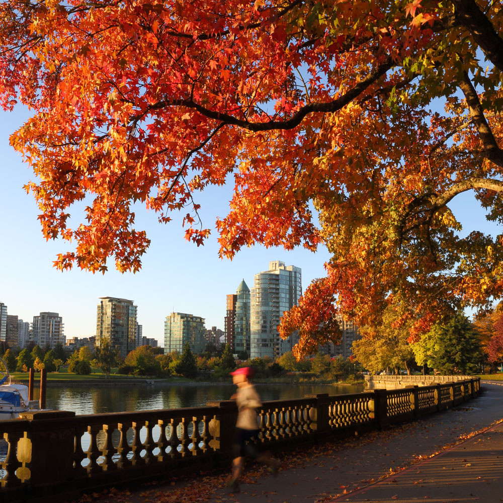 Vancouver city through the autumn trees