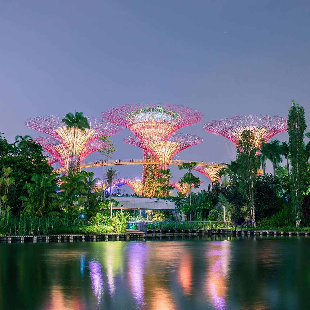 Singapore's Supertree Grove