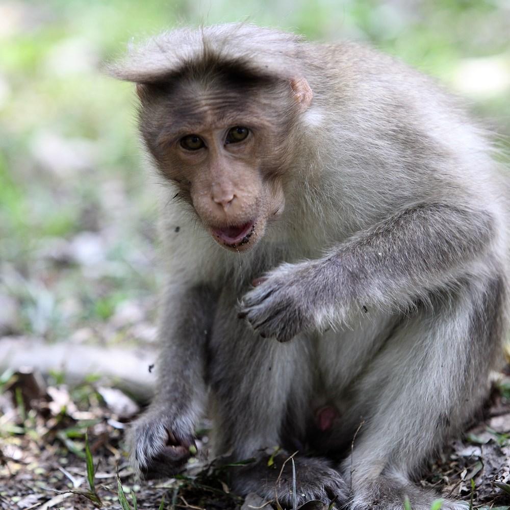 Monkey at Periyar Wildlife Sanctuary