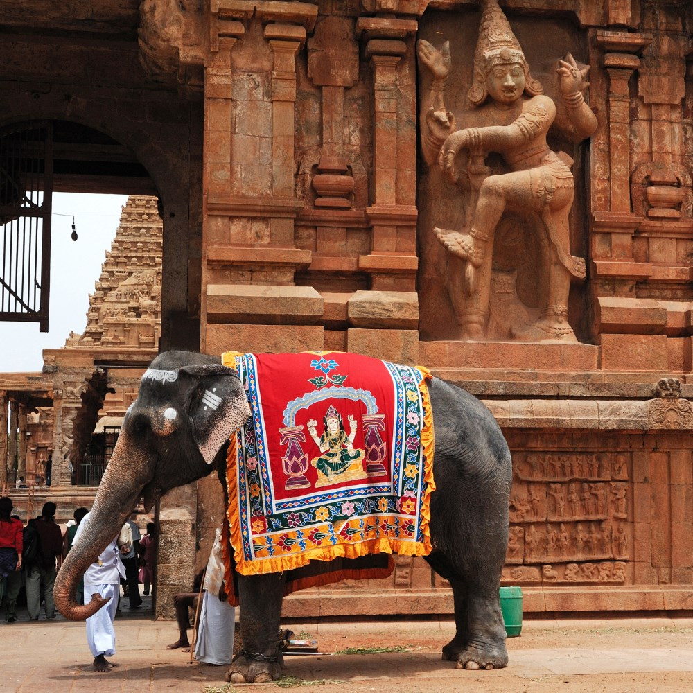Elephant in Tanjore